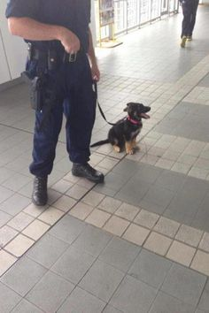 """""""Sittin' up straight just how you taught me, captain!"""" 