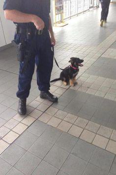 Perro policía jejeje
