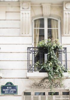 Window, Ile Saint-Louis, Paris, by Georgianna Lane
