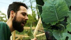 Como Plantar Couve em Casa - Minha Horta na Cidade EP10