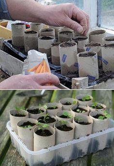 Plantjes kweken maar geen plantenpot bij de hand? Een toiletrol biedt uitkomst!