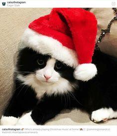 Christmas cute kitten