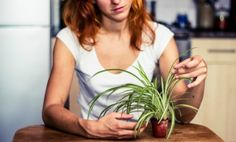 10 Best Houseplants to Improve Air Quality