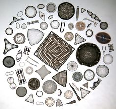 Diatoms, Oamaru, New Zealand. Unicellular organisms with a bilaterally symmetrical cell wall made of silica.