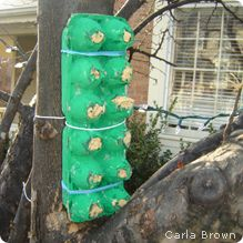 Make a Homemade Suet Feeder - National Wildlife Federation