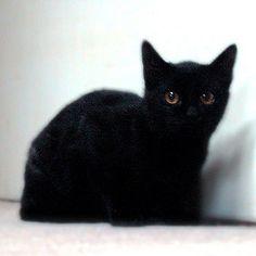 黒猫!                   #cat #neko #cats ねこ 猫 黒猫