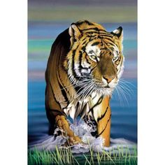 Messom Tiger in Water Fine Art Reproduction, Multicolor
