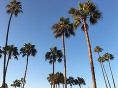 Palm Trees, Vsco, Surfing, Artsy, Instagram, World, Nature, Coachella, West Coast