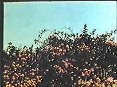 All My Life (1966) - Bruce Baillie