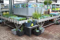 Een overzicht van al onze water planten