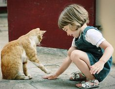 Learn how to read cat body language and create a closer bond with your pet. From how they move their body to what they do with their eyes, it's all covered. Cute Cats, Funny Cats, Funny Animals, Cute Animals, Humorous Cats, Happy Animals, Crazy Cat Lady, Crazy Cats, Cat Body
