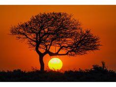 cuadro decorativo de arbol al atardecer con cielo naranja, impresion digital sobre lienzo de 3 cm grosor