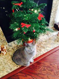 Kitty w/Tree