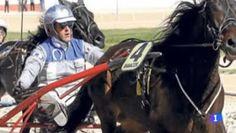 """""""O GRITO DO BICHO"""": Espanhol preso por espancar cavalo até à morte por..."""