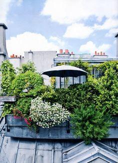 Un coin de verdure sur les toits, rooftop, terrasse, green, terrasse