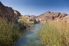 Bill Williams Wildlife Refuge - Lake Havasu, AZ