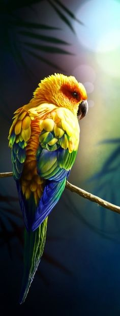 The Sun Parakeet or Sun Conure parrot (Aratinga solstitialis) is native to northeastern South America