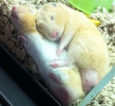 37 Small, Cute And Lovely Pictures Of Hamsters Cute Animal Memes, Cute Animal Pictures, Cute Funny Animals, Hamster Pics, Baby Hamster, Otters Cute, Cute Rats, Baby Animals Super Cute, Cute Little Animals
