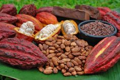 Origen cacao is chocolate production company in Colombia. We offer different types of products that prepare using high quality cacao beans. We made white chocolates using raw organic cacao butter form indigenous tribes. The cacao nibs are used to provide crunchy bites to the white chocolate. The yummier taste of our chocolate will bring you the interest about knowing about the source from where the cacao beans are collected.