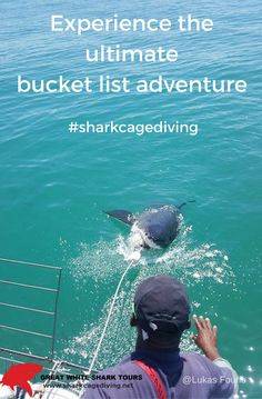 Shark cage diving is the number one bucket list experience in the world. Gansbaai in South Africa is known as the Great White Shark capitol of the world because globally it is the only palce where you can safely dive with whites sahrks all year round The Great White, Great White Shark, Shark Cage, Adventure Bucket List, Sharks, Habitats, Diving, South Africa, Whale
