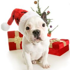 Want to help give back to homeless pets this Christmas? Here's how: http://www.schomphonda.com/blog/2014/december/17/hsspv-volunteer-at-the-4th-annual-furry-friends-christmas-feast.htm HSSPV | Schomp Honda | pet shelter | Christmas | volunteer | holidays