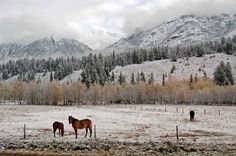 December 2, 2012                                                          Canmore ALberta Bow Valley horses in meadow