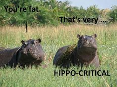 Animal humor is just too funny