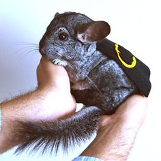 Of COURSE I need this.  Chinchilla costume cape Batman by laMarmotaCafe on Etsy, $14.00