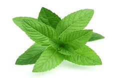 Buy 1 Get 1 Free - Peppermint (menta piperita) Essential Oil Mint Leaves Benefits, Mint Benefits, Quick Hair Growth, Top 10 Home Remedies, Natural Remedies, Herbal Remedies, Allergy Remedies, Apple Mint, Gardens