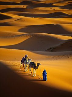 Sahara desert, Morocco (think about walking in the desert with your camel like this--it's hard for me to comprehend).