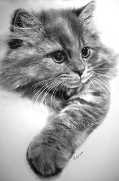 30 Beautiful Cat Drawings - Best Color Pencil Drawings and Paintings | Read full article: http://webneel.com/cat-drawing | more http://webneel.com/daily | Follow us www.pinterest.com/webneel