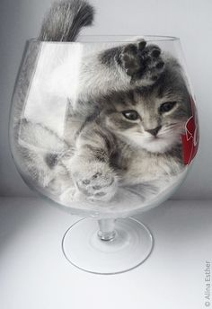 Kitten through the looking glass...