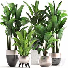 3d models: Indoor - Plant collection 308. House Plants Decor, Patio Plants, Plant Decor, Best Indoor Plants, Exotic Plants, Corner Plant, Indian Garden, Inside Plants, Miniature Plants