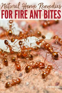 Herbal Remedies Quickly relieve fire ant bites with these simple natural home remedies, including our favorite tried-and-true essential oil for reducing pain, swelling, itching, and irritation. Works SO well!