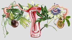 Giada Fiorindi - Botanical Uterus Illustration