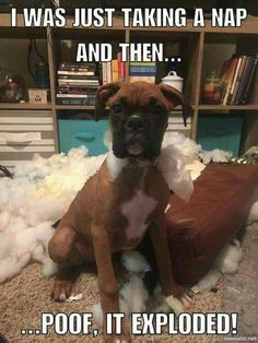 Things I adore about the Boxer Pup dog funny dog funny funny aesthetic funny hilarious funny sleeping Boxer Mom, Boxer And Baby, Funny Animal Pictures, Funny Animals, Cute Animals, I Love Dogs, Puppy Love, Cute Puppies, Cute Dogs