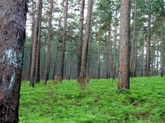 The Piney Woods in Hemphill, Texas.