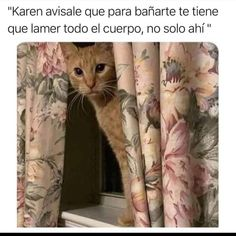 You gotta go all over Funny Images, Funny Photos, Karen Memes, Rest, Humor Mexicano, Bullet Journal Ideas Pages, Comedy Central, Adult Humor, Animal Memes