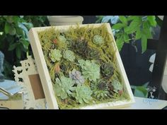 Succulent Hanging Wall Designs Floristry Tutorial - YouTube