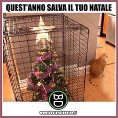 Salva il tuo #Natale! TAGGA i tuoi amici e invitali a iscriversi a #bastardidentro #gatto #gatti #gabbia #natalizio… www.bastardidentro.it