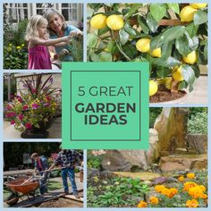 Inspire clients' green thumb with a garden just right for them. Victory Garden, Real Family, New Homeowner, Garden S, Begonia, Planting Seeds, Petunias, Herbs, Inspire