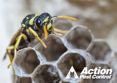 Protect Your Home And Family From Stinging Insects http://www.actionpest.com/blog/post/protecting-your-home-and-family-from-stining-insects