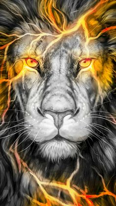 León Lion Wallpaper, Animal Wallpaper, Animals Beautiful, Cute Animals, Tiger Pictures, Lion Drawing, Lion Love, Tiger Art, Lion Of Judah