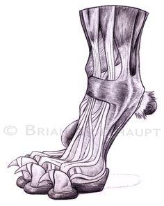 Pants Weather Press: Anatomy Study II