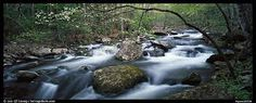 spring in the smokies images - Google Search