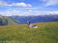 Berghund English Setter, Mountains, Nature, Travel, Dogs, Naturaleza, Trips, Viajes, Traveling