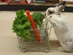 Just a bunny getting groceries