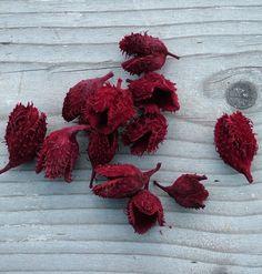 Bordós-narancsos színvilágban készülő őszi dekorációhoz bükk kupacs bordó színben.
