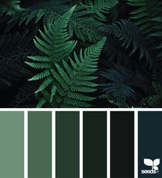 Ideas Home Color Palette Green Design Seeds Green Paint Colors, Green Colour Palette, Colours, Seeds Color Schemes, Green Colour Images, Bedroom Colour Schemes Green, Green Pallete, Monochromatic Color Scheme, Nature Color Palette
