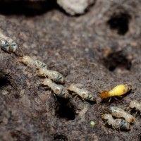 Termites Swarm New Orleans, People Think It's The Apocalypse